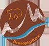DrosopigiRace